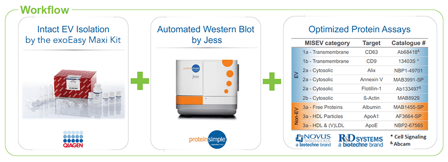 Extracellular Vesicle Protein Analysis Workflow with exoEasy Kits and Simple Western Instruments