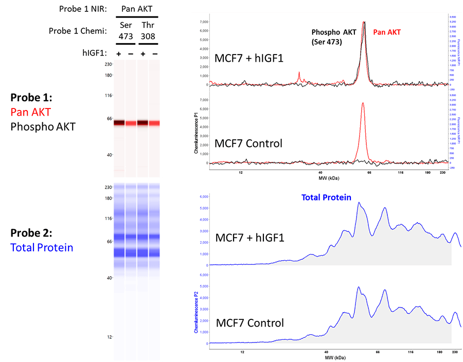 Quantitative Western Blotting Results for Probe 1 Phospho AKT and Probe 2 Total Protein Detection with Chemiluminescence MCF7 + hlGF1 and MCF7 Control Peak Results