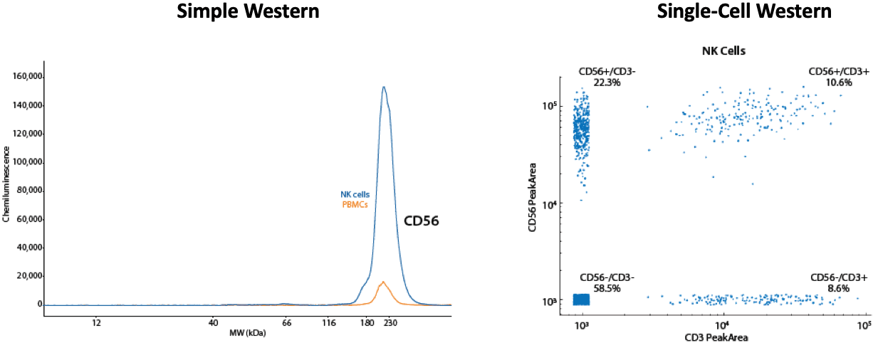 Simple Western Chemiluminescence CD56 and Single-Cell Western CD56 PeakArea Immune Cell Population Test Results