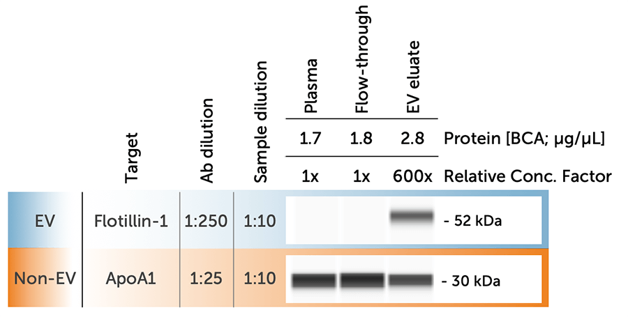 EV Protein Expression Across Plasma Fractions Using exoEasy Maxi Kit (QIAGEN) and Simple Western Automated Western Blot (ProteinSimple)